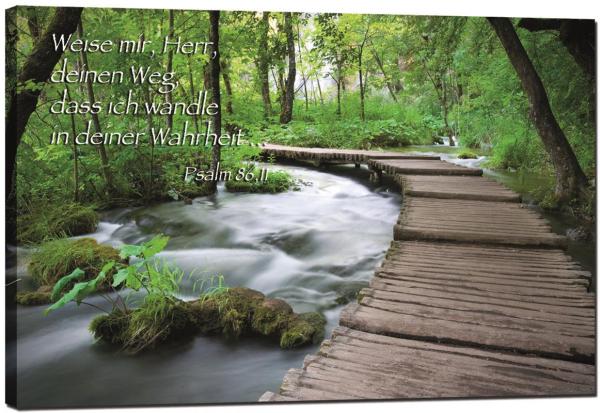 Bruecke_im_Wald.jpg