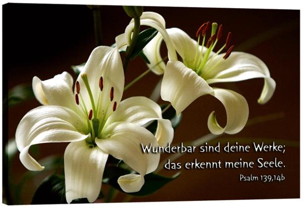 115_Bild_Lilien.jpg