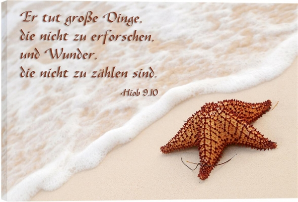 190_Bild_Seestern.jpg