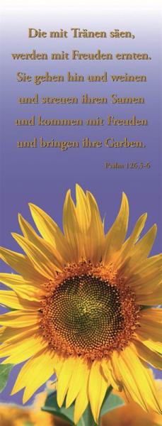 Banner_Sonnenblume.jpg