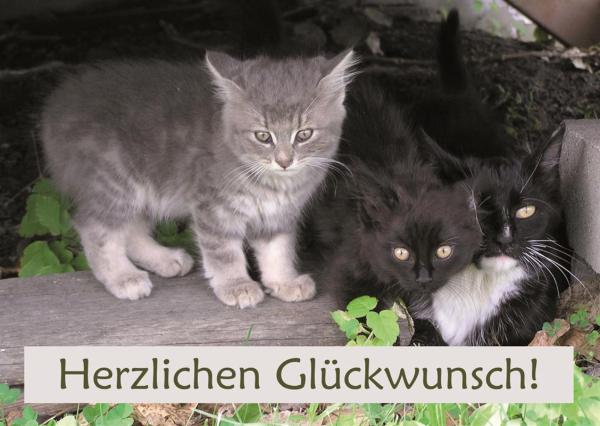 Doppelkarte Kuvert Karte Geburtstagskarte Geburtstag Katze