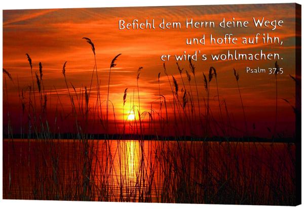 168_Bild_Schilf_am_See.jpg