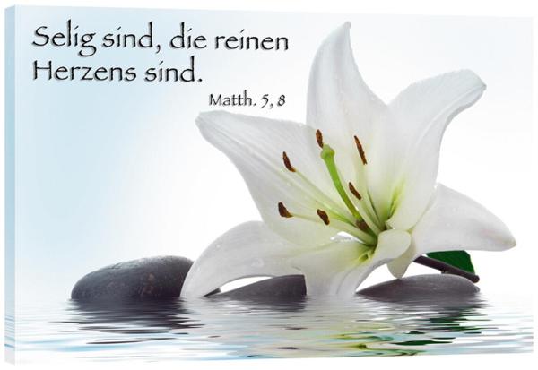132_Bild_Lilie_im_Wasser.jpg